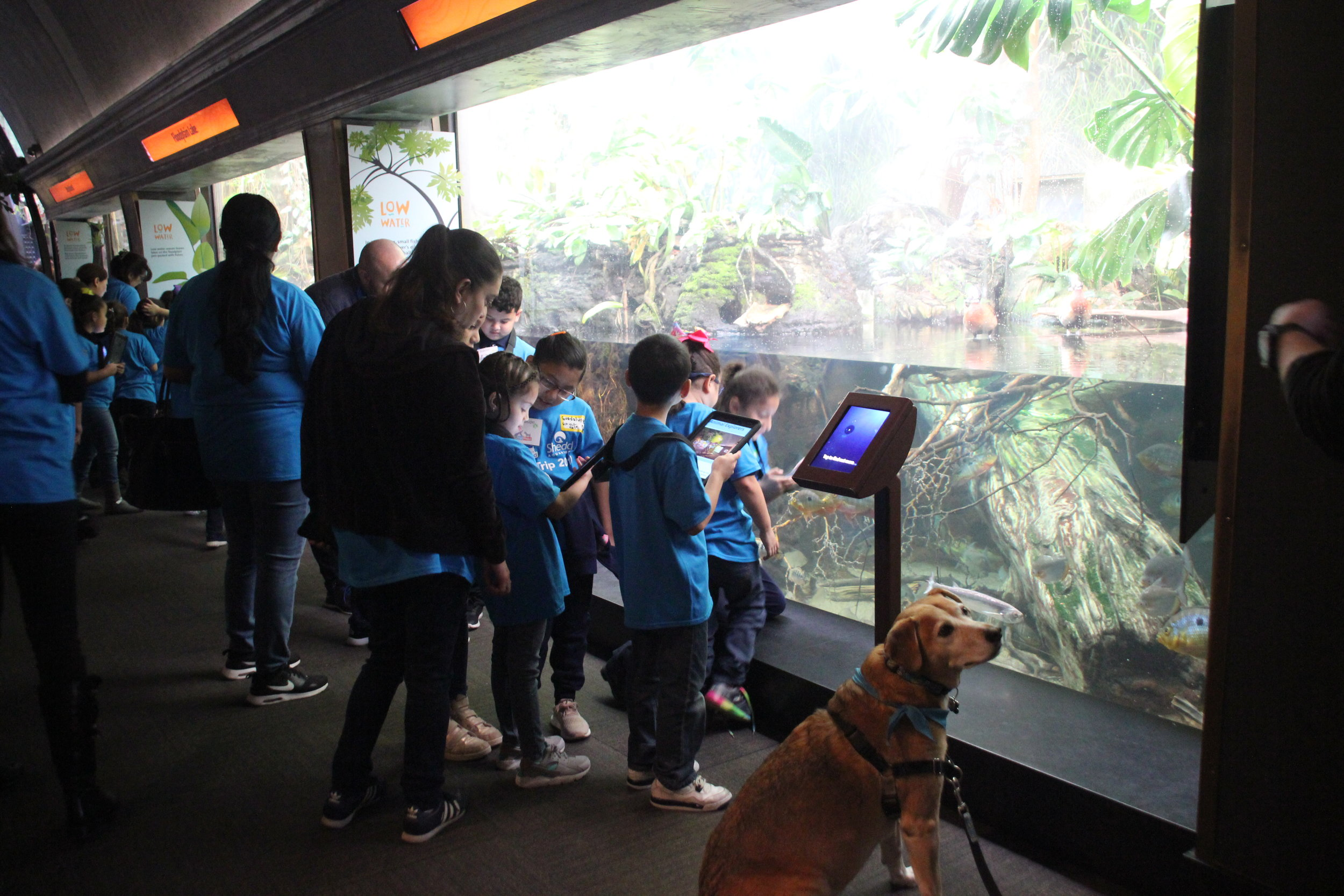 Second grade students from Funston Elementary use iPads to take pictures of animals and go through a guided activity about how animals blend into their environments.