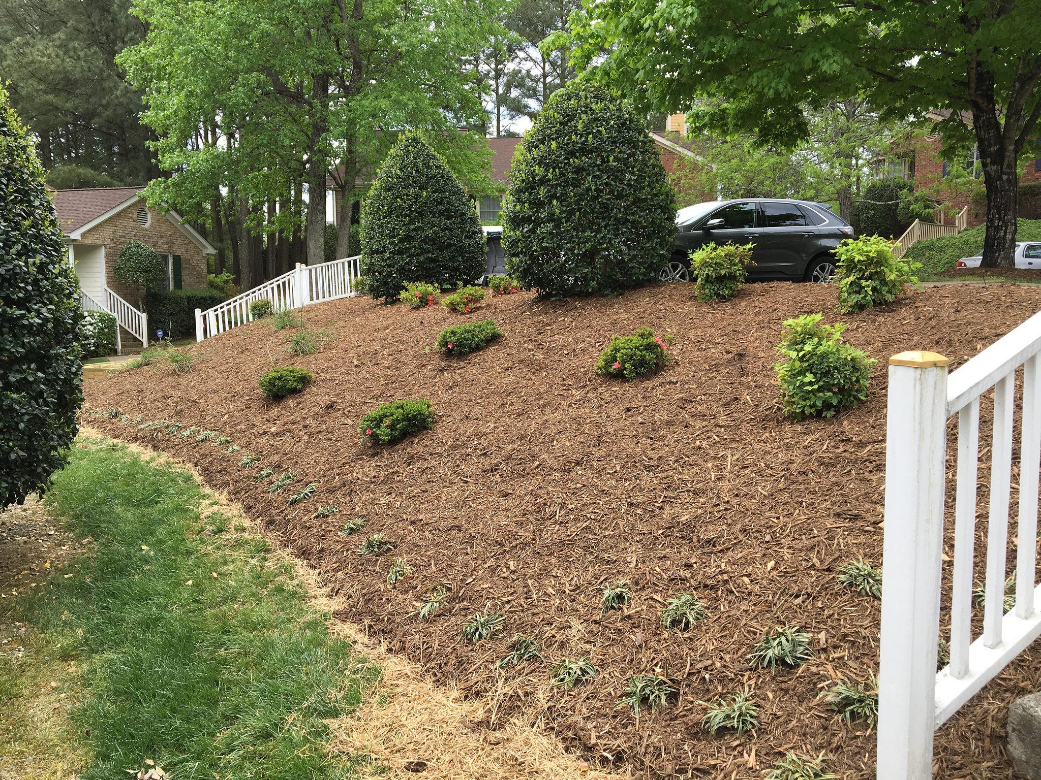 Fresh new plantings on hillside.