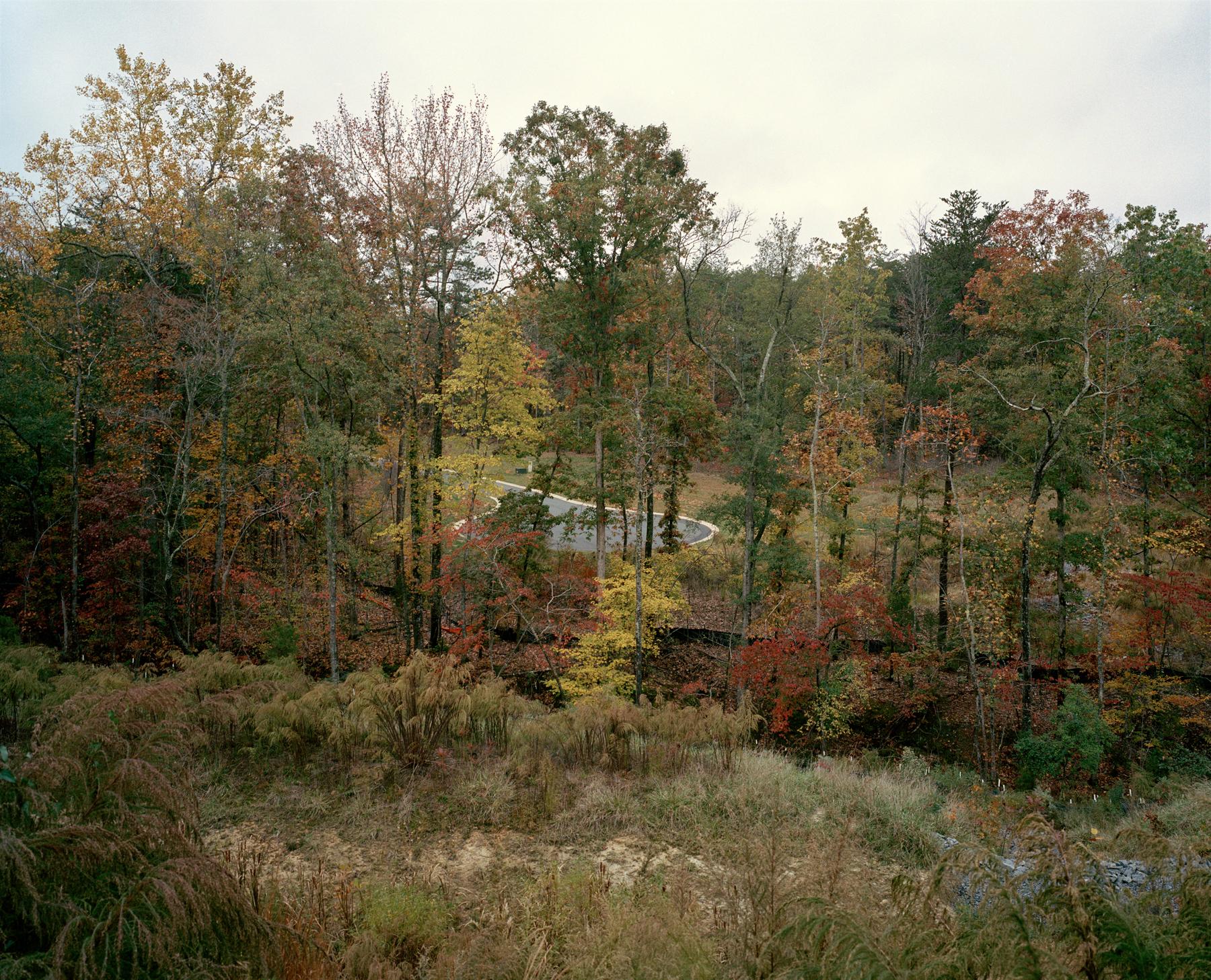 Cul-de-sac, Lake Waylie, NC. 2009