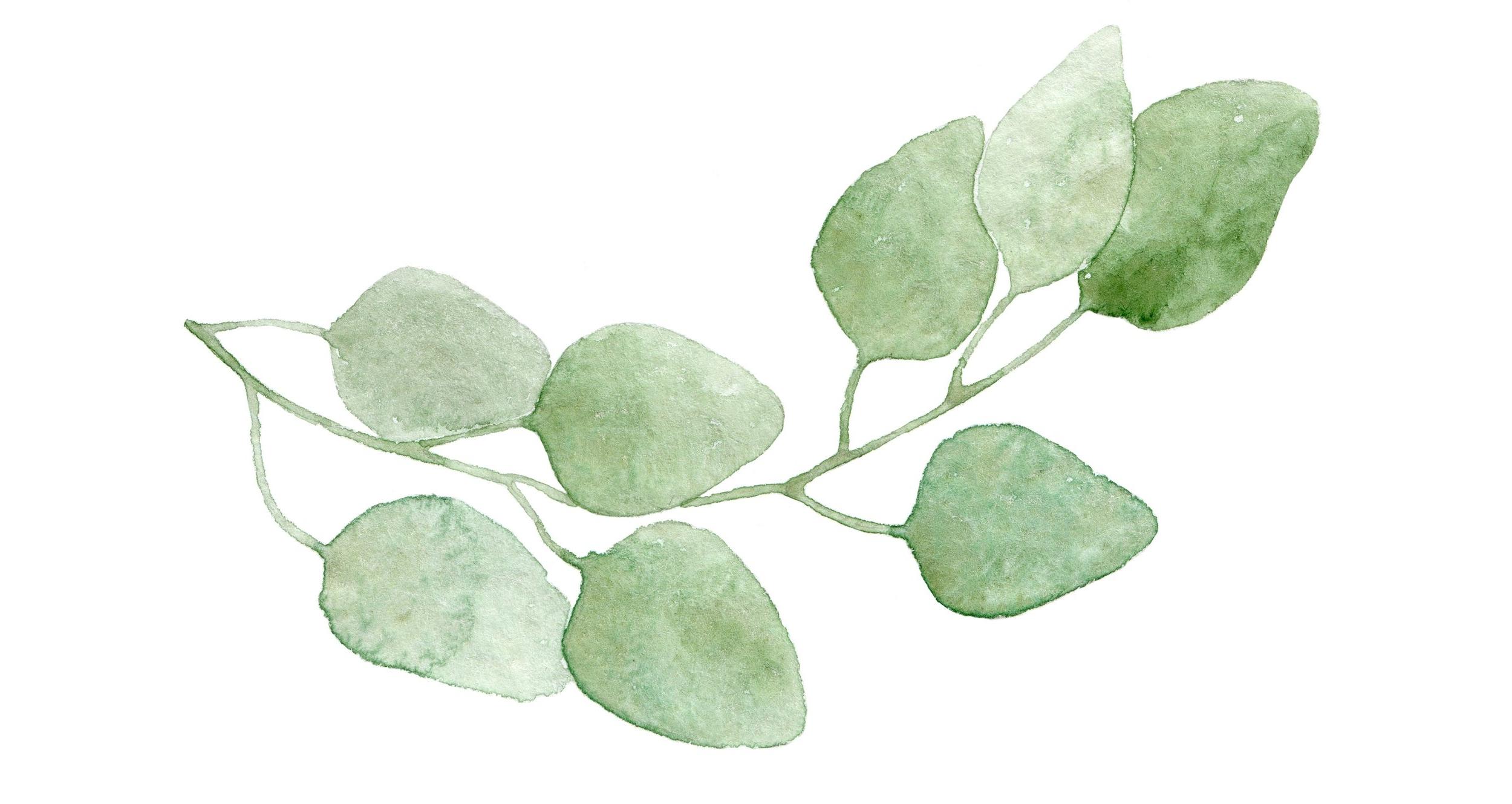 leaf 11.png