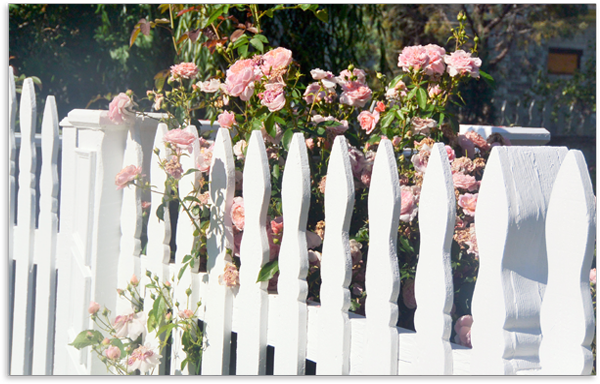 rosespicketfence.png