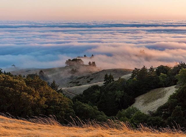 Enjoy this spectacular view of Mt. Tamalpais fog perfect during summer and fall. Accessible through the town of Kentfield. Popular for hiking, biking and running. ⠀⠀⠀⠀⠀⠀⠀⠀⠀ ⠀⠀⠀⠀⠀⠀⠀⠀⠀ #featurefriday⠀⠀⠀⠀⠀⠀⠀⠀⠀ #mounttamalpais⠀⠀⠀⠀⠀⠀⠀⠀⠀ #kentfield⠀⠀⠀⠀⠀⠀⠀⠀⠀ #lovewhereyoulive⠀⠀⠀⠀⠀⠀⠀⠀⠀ ⠀⠀⠀⠀⠀⠀⠀⠀⠀ 📸 CTTO