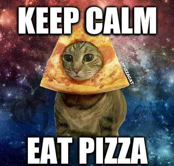pizza cat.jpg