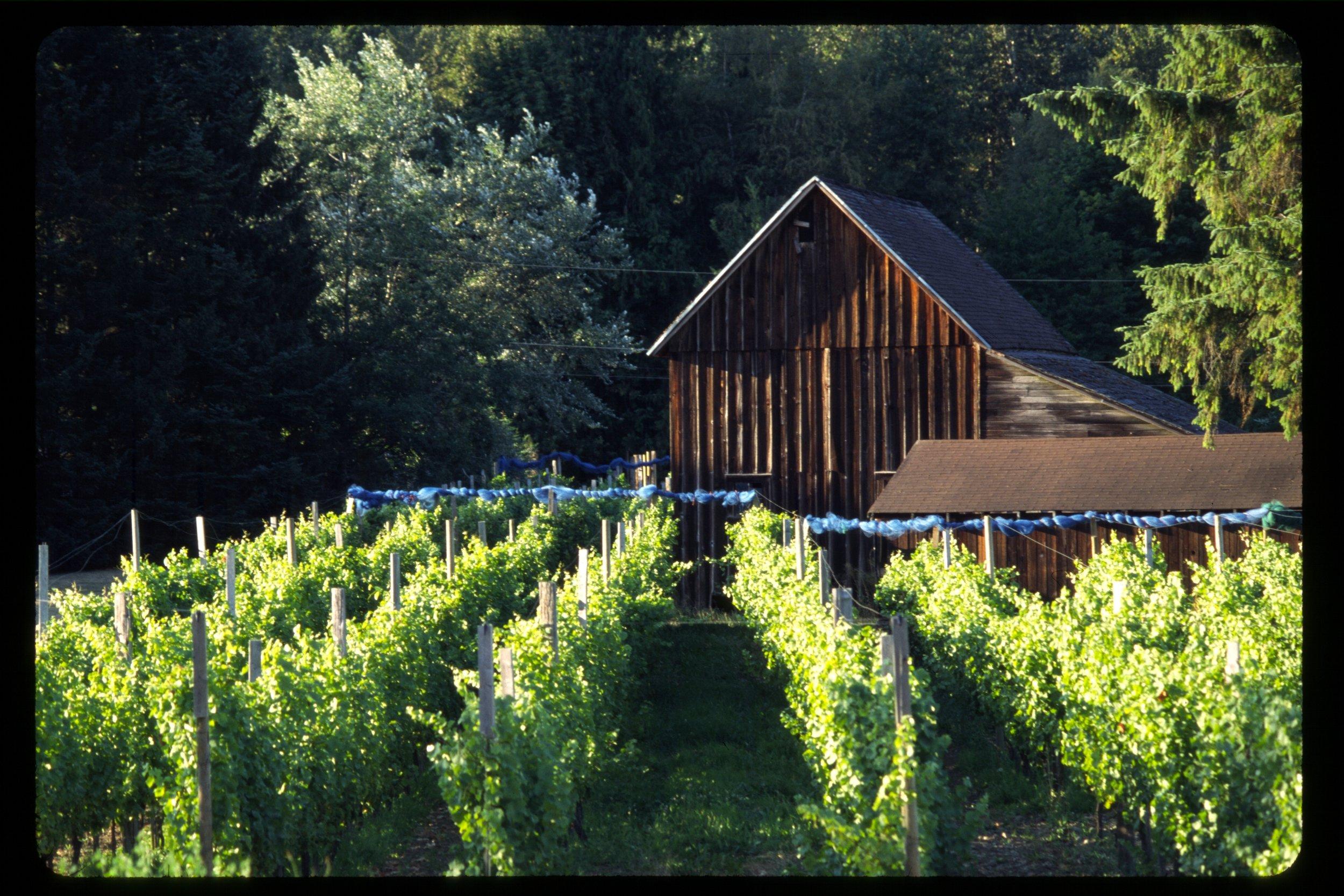 Brunk Mt Baker Vineyards.JPG