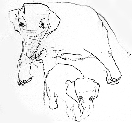 Elephant mother and baby, pen