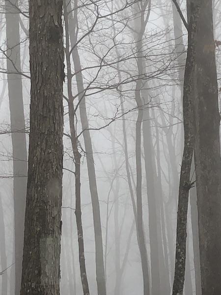 IMG_0343.jpeg fog.jpeg