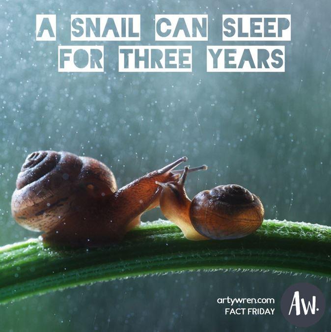 Fact Friday_Nature_Snail.JPG