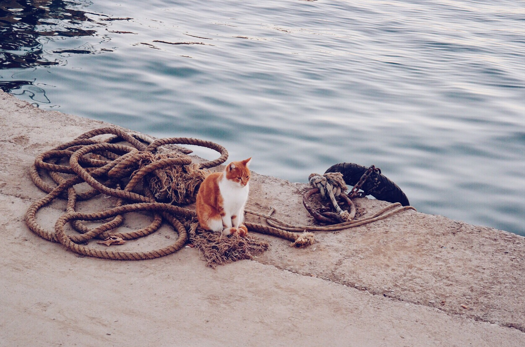 A cat waiting for fish