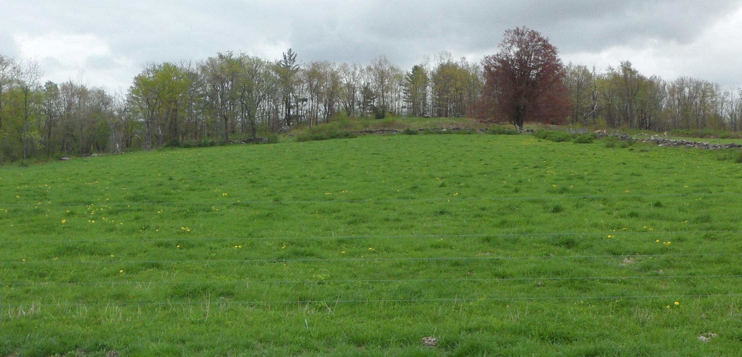 Spring pasture, Hardwick, Massachusetts