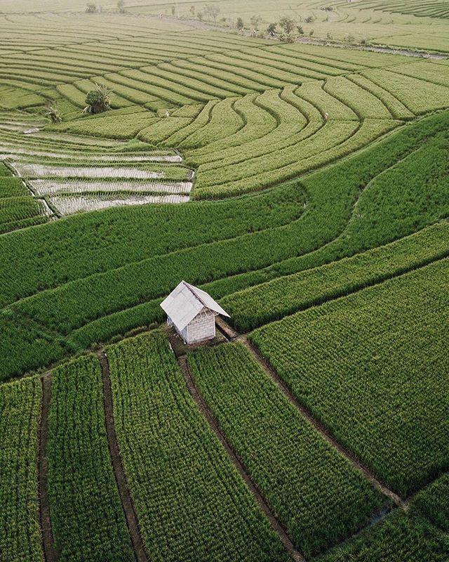 Rice paddies for days 📸@hidwii 📍Canggu, Bali