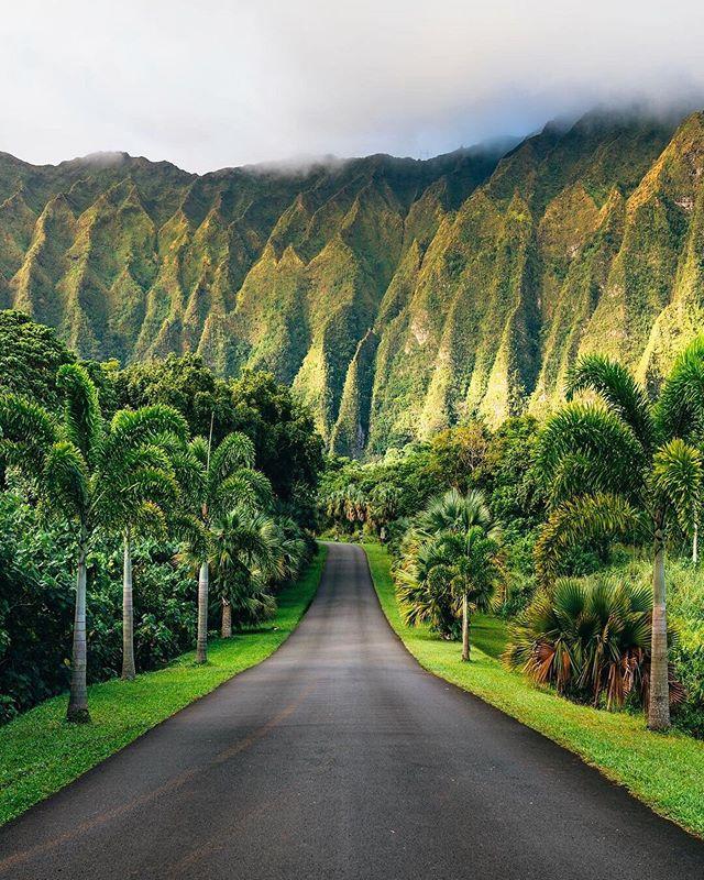 Green on green on green 💚📷@vincelimphoto 📍Oahu, Hawaii