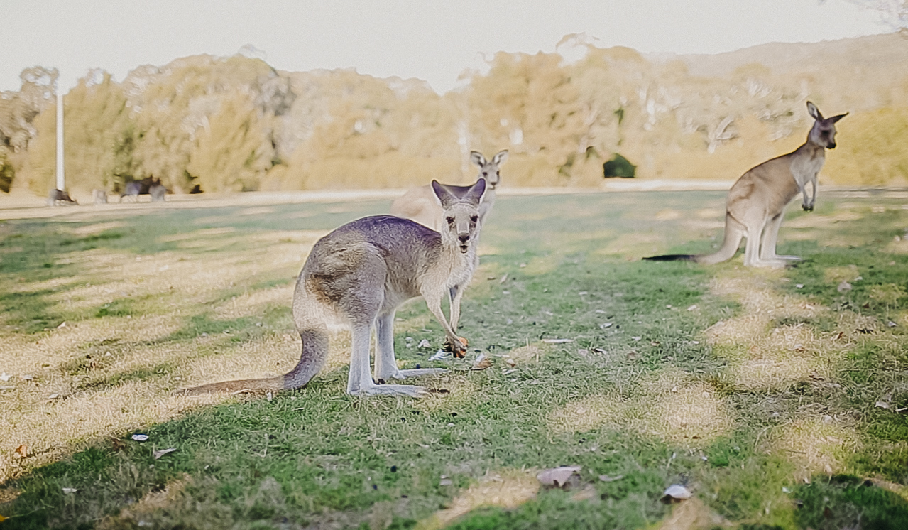 Canberra-Australia-Things-To-Do-6.jpg