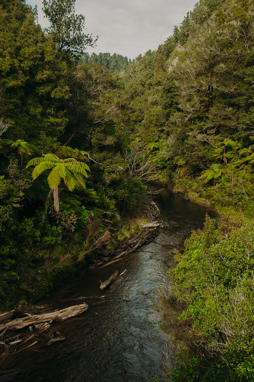 Forgotten-World-Highway-New-Zealand-12b.jpg