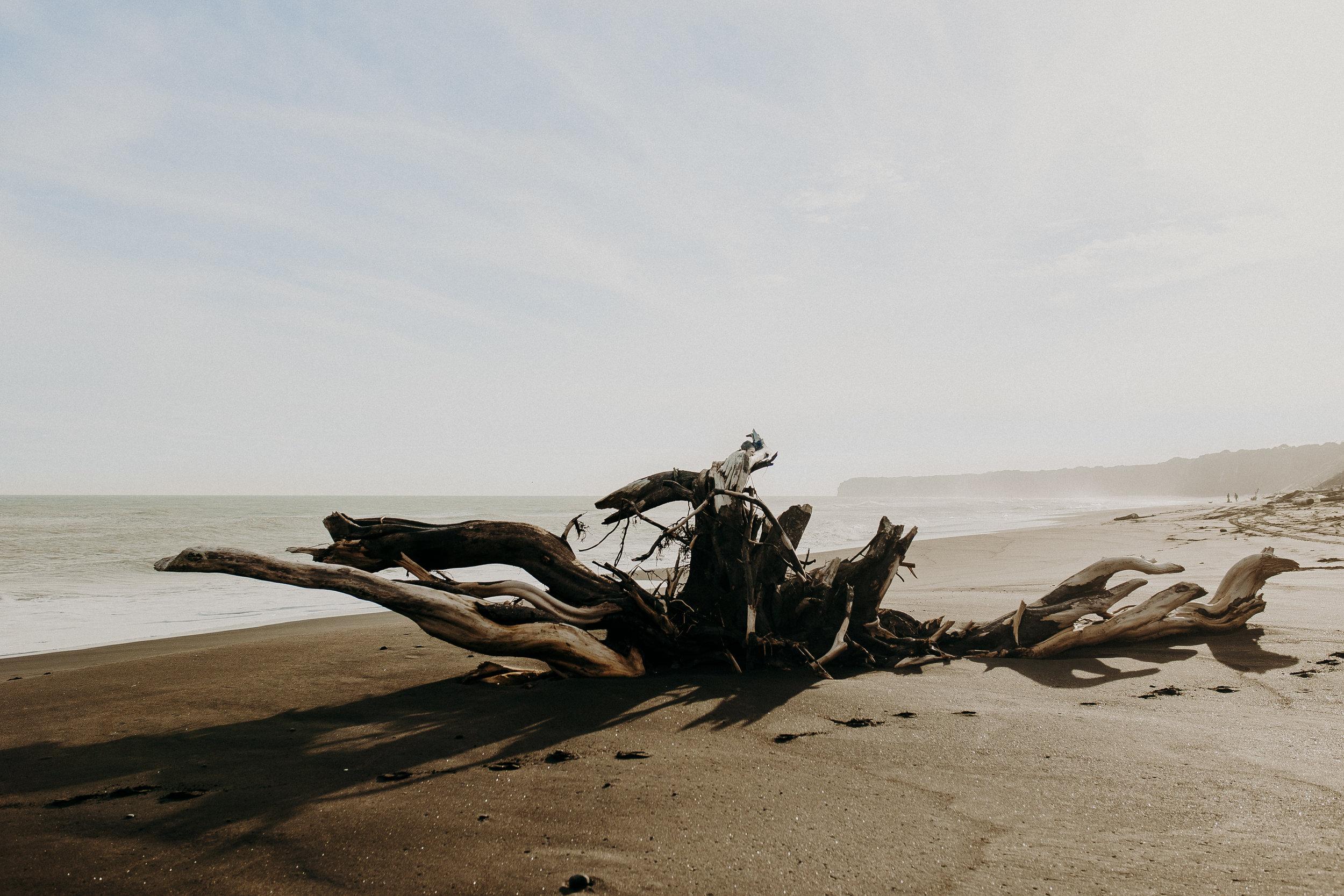 new-zealand-black-sand-beaches-north-island.jpg