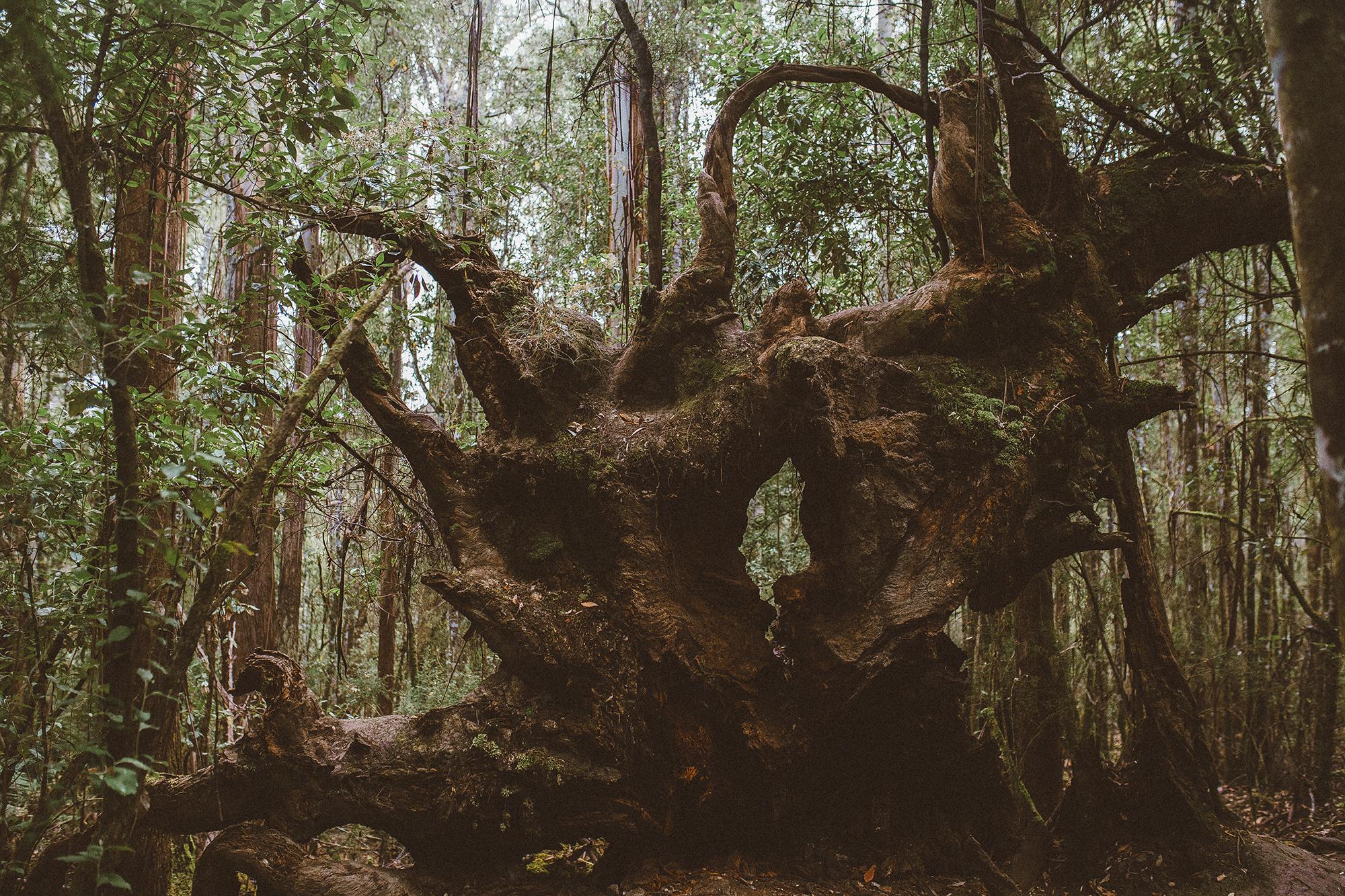 tasmania southwest national park mountains-6resized.jpg