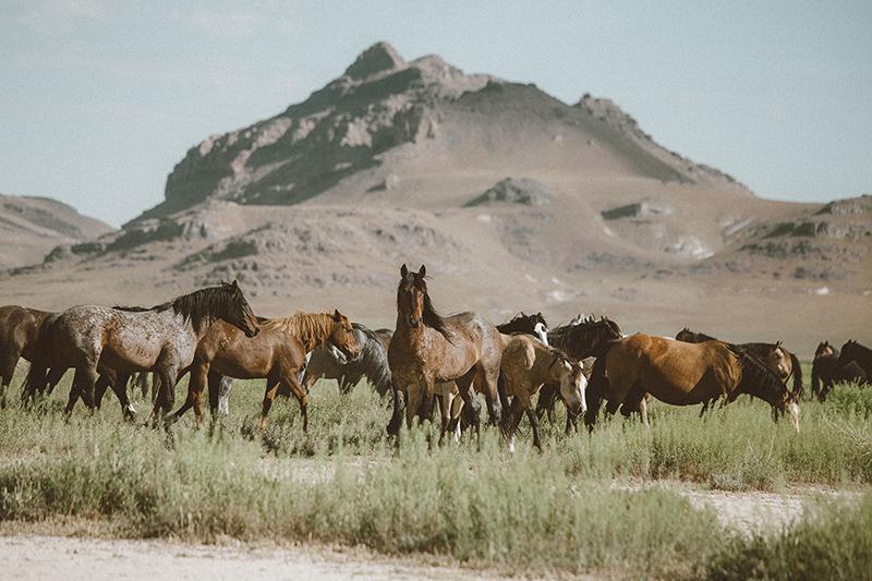 utahs-wild-horses-2-low-res.jpg
