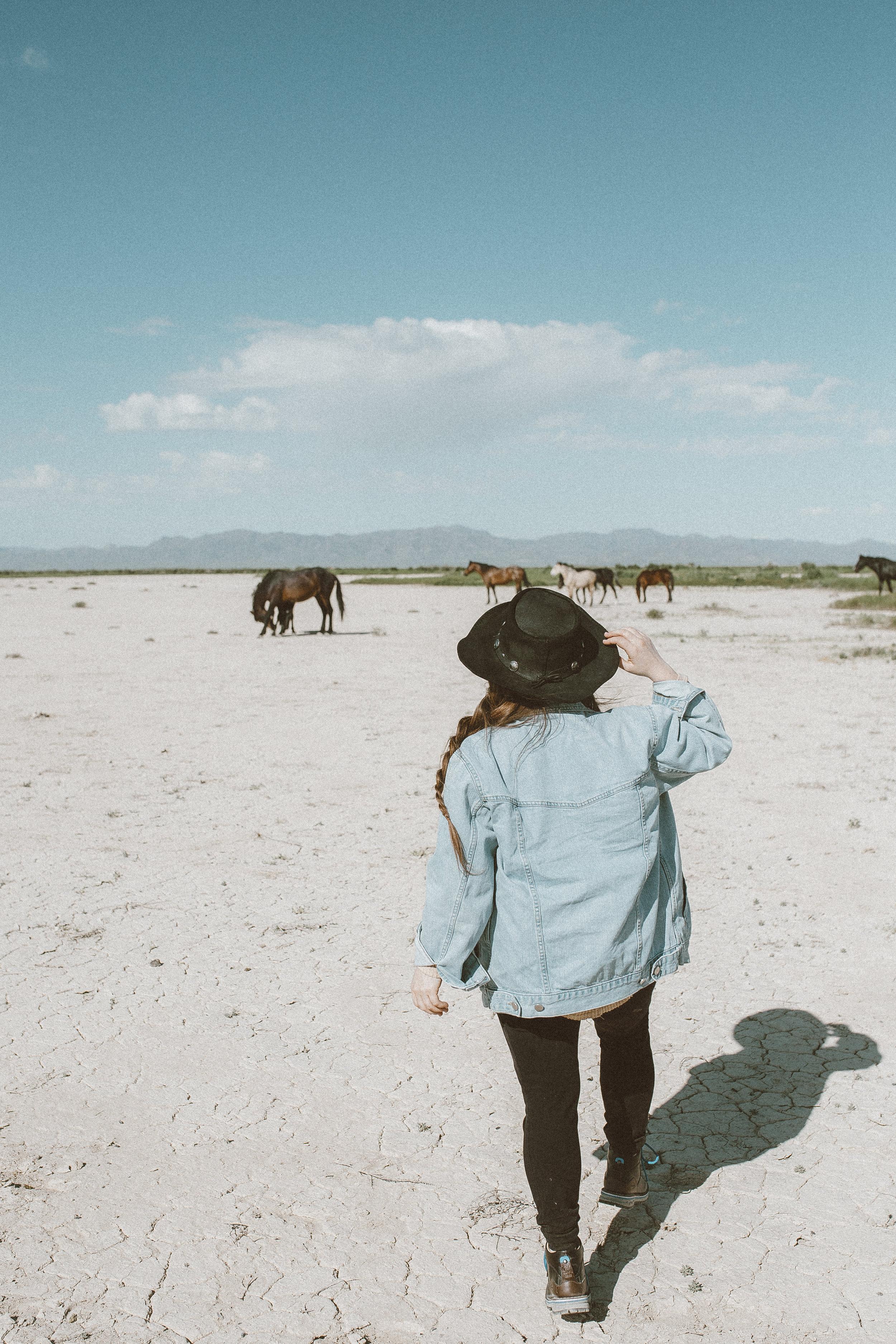 utah's wild horses mustangs-23.jpg