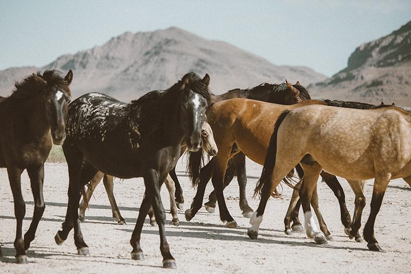 utahs-wild-horses-low-res.jpg