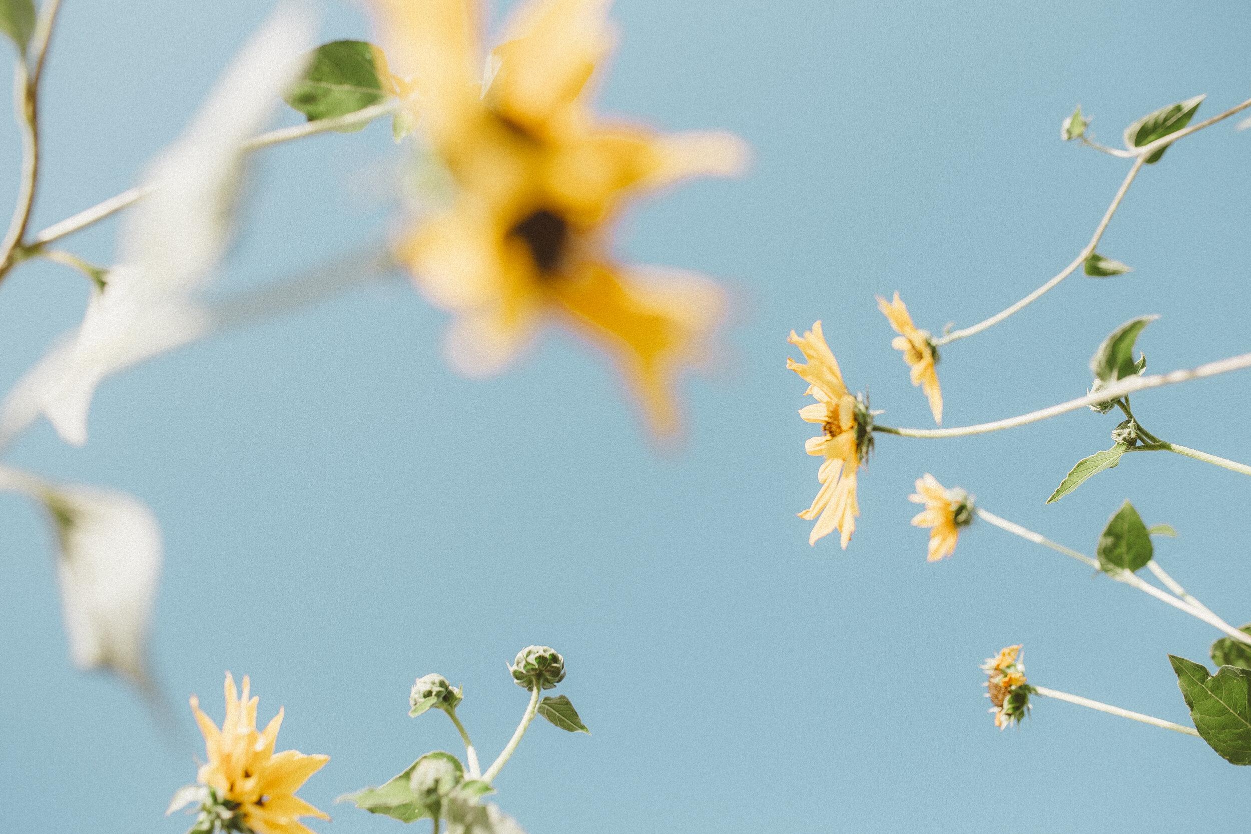 Big Blanket Co Review Sunflower Fields-11.jpg