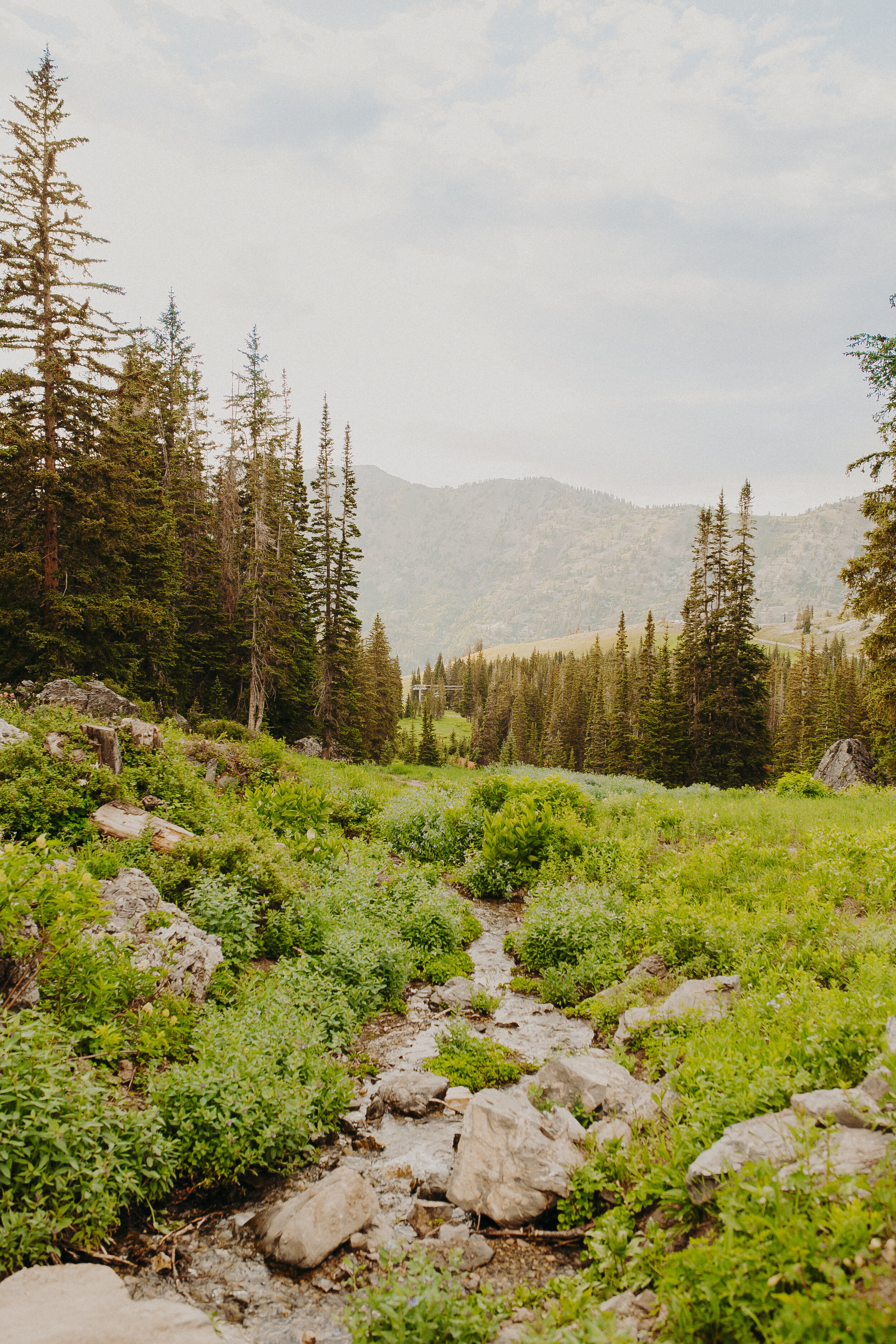 Albion Basin Cecret Lake Hike Utah Preserving Our Lands-9.jpg