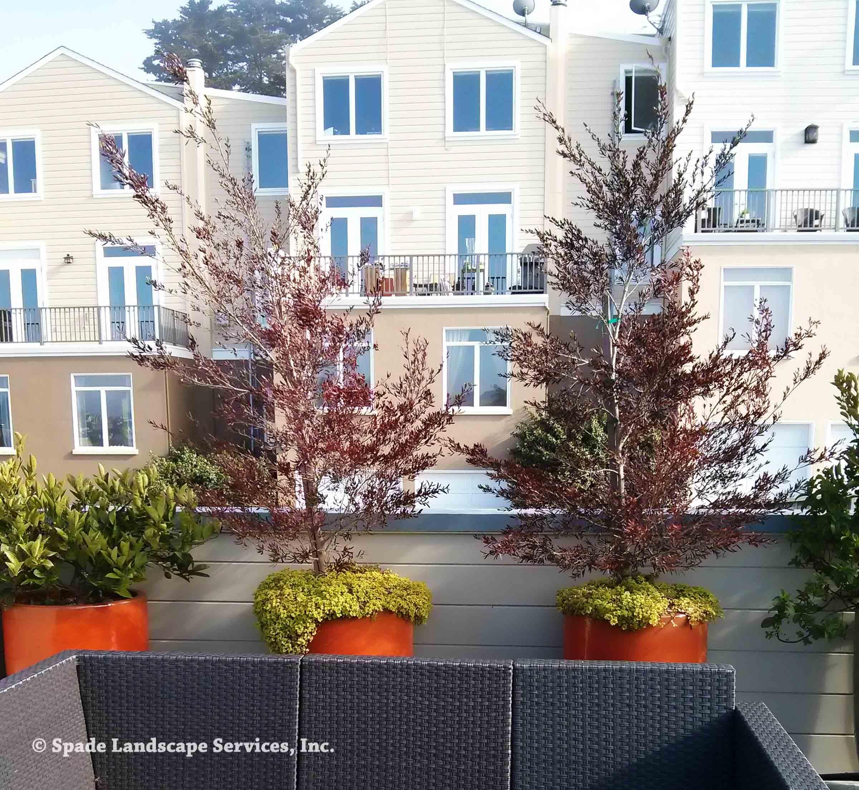 Rooftop Container Garden -
