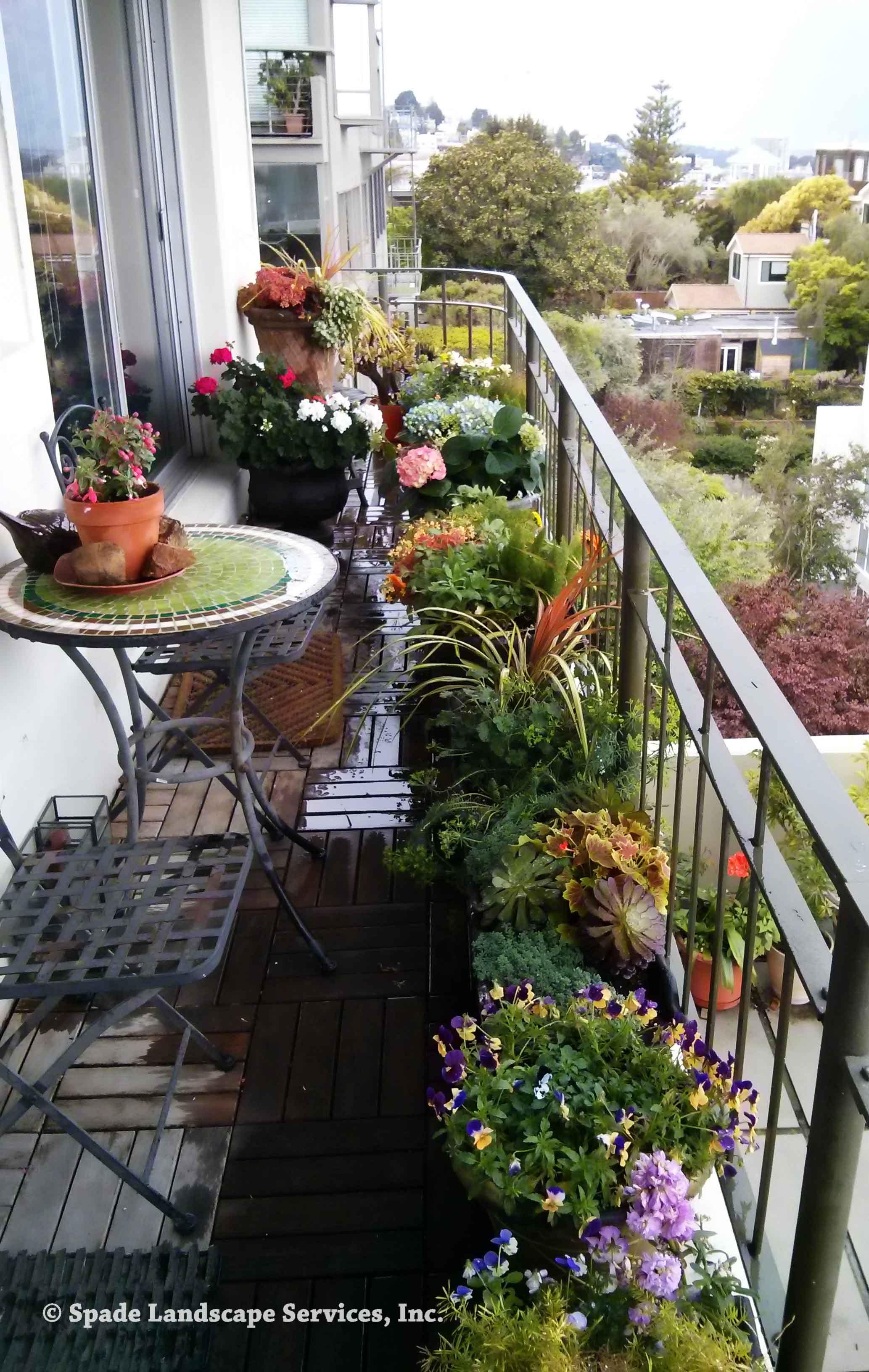 Telegraph Hill Container Gardening