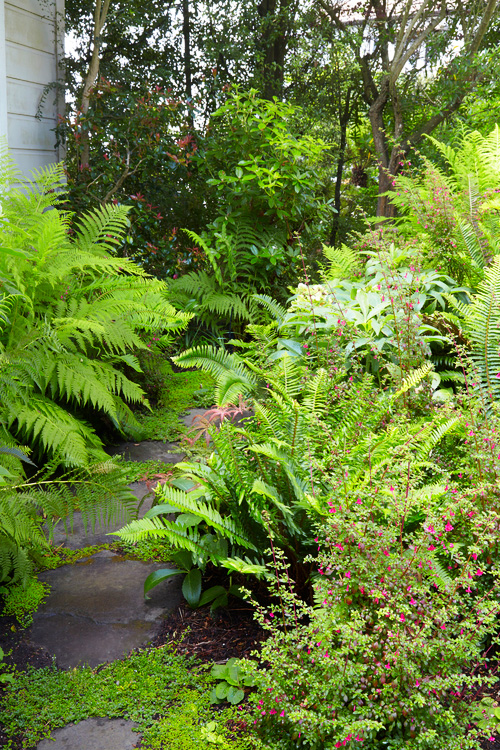 Ferns-and-Fuchsia.jpg