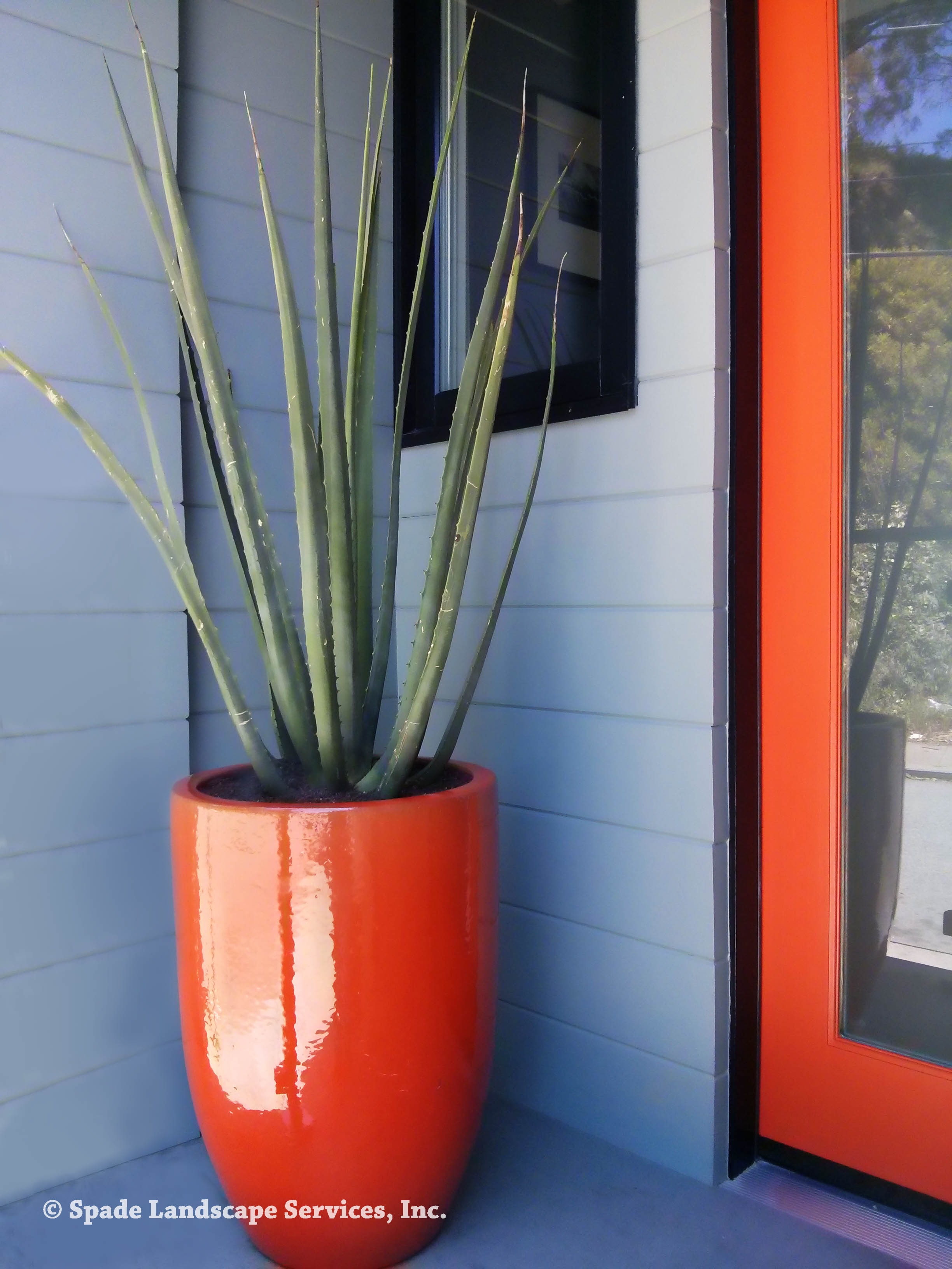 Innovative landscaping for a small entryway