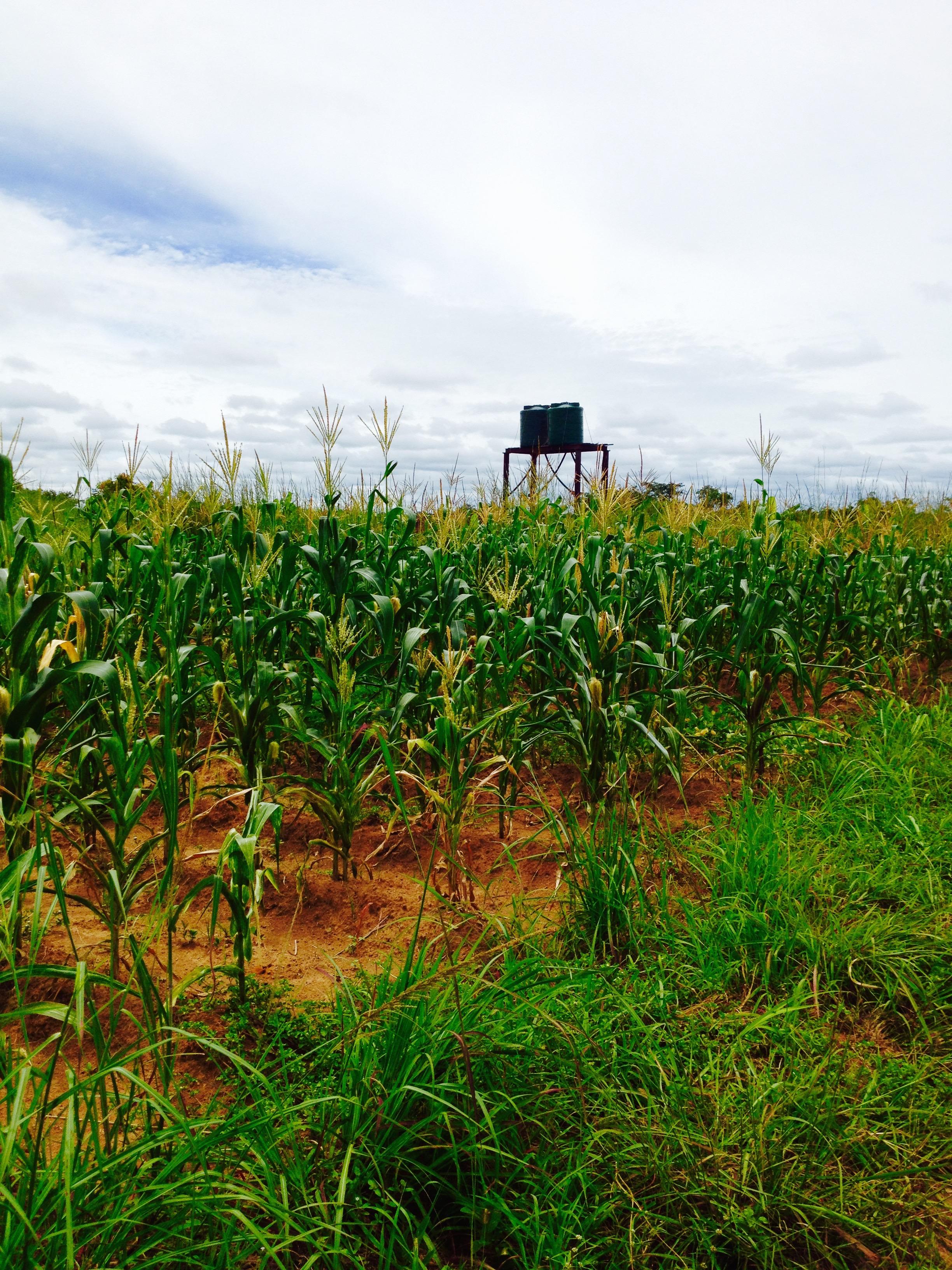 Zambia 2010 031 (1).jpg