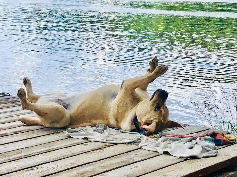 """Lydia - """"The sun is shining, I think Lydia is in her Happy Happy place (or she is doing yoga) lol she is adapting well to lake life"""""""