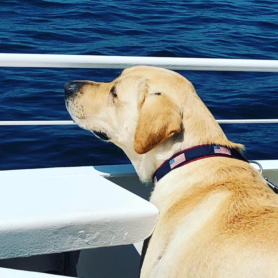 """Porter - """"Porter having a blast on the ferry to Martha's Vineyard.. he's a hot commodity everywhere we go especially with the littles 💞"""""""