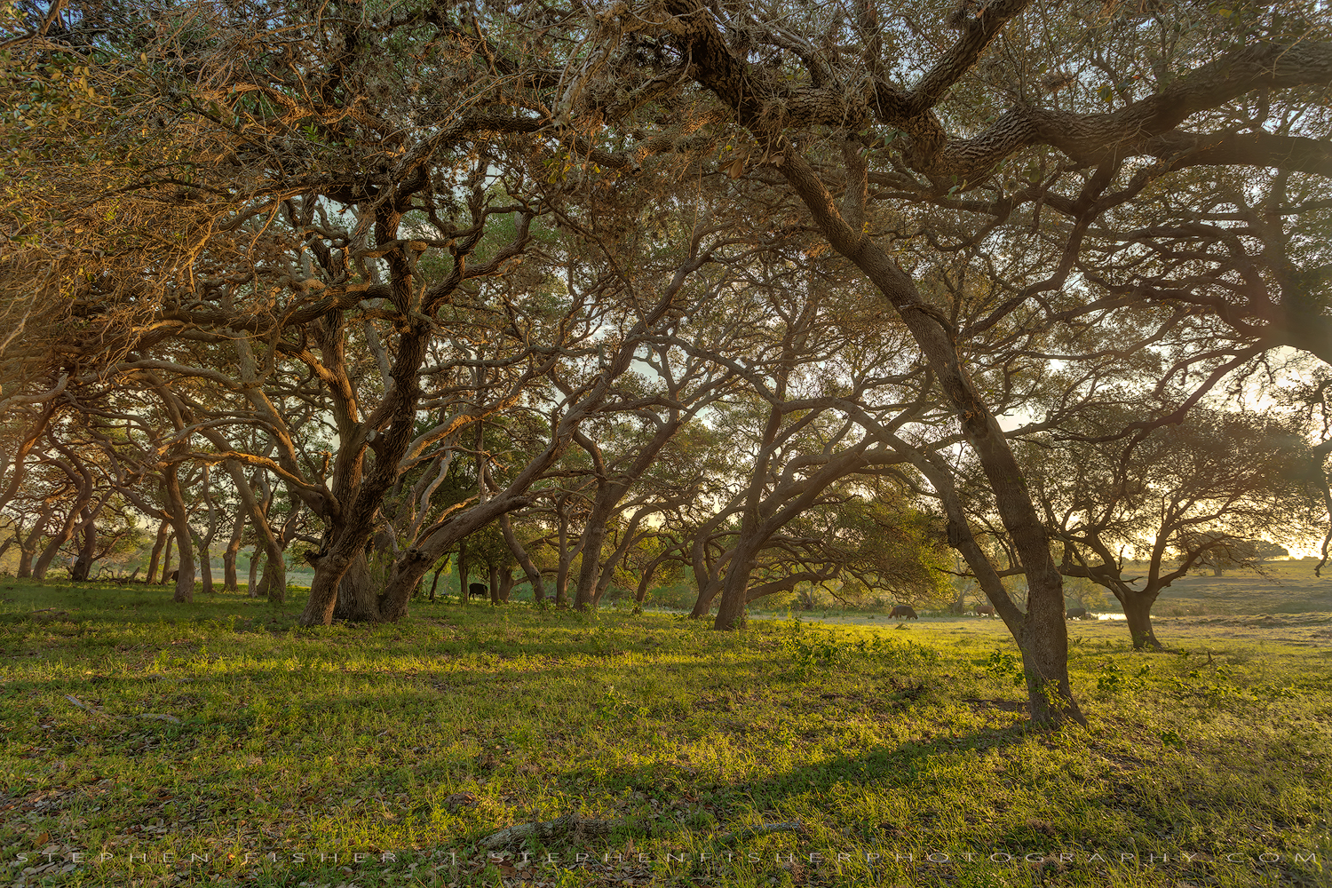 The Ranch  Refugio County, TX