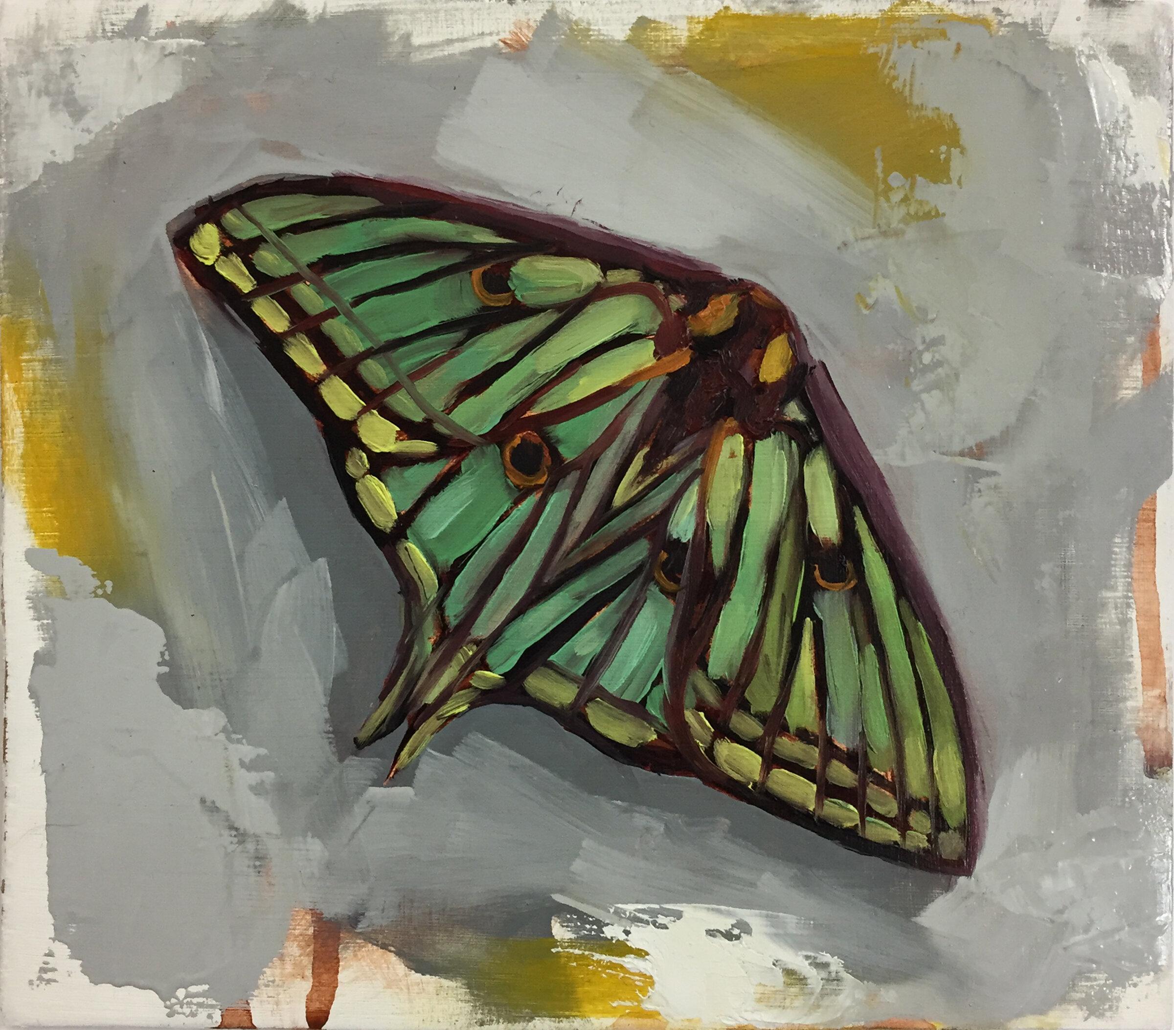445. Moth.JPG