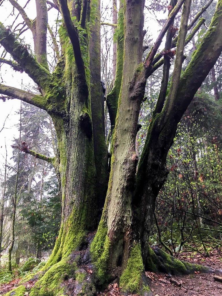 RainforestTrunk.jpg