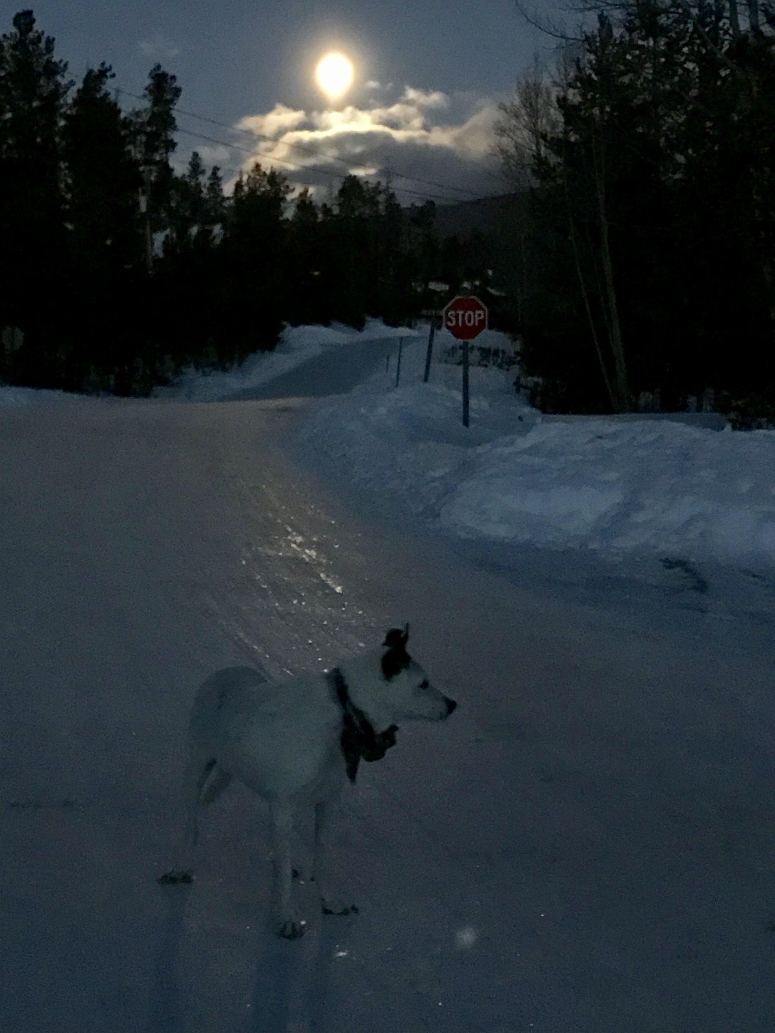 Moonlight walks.jpg