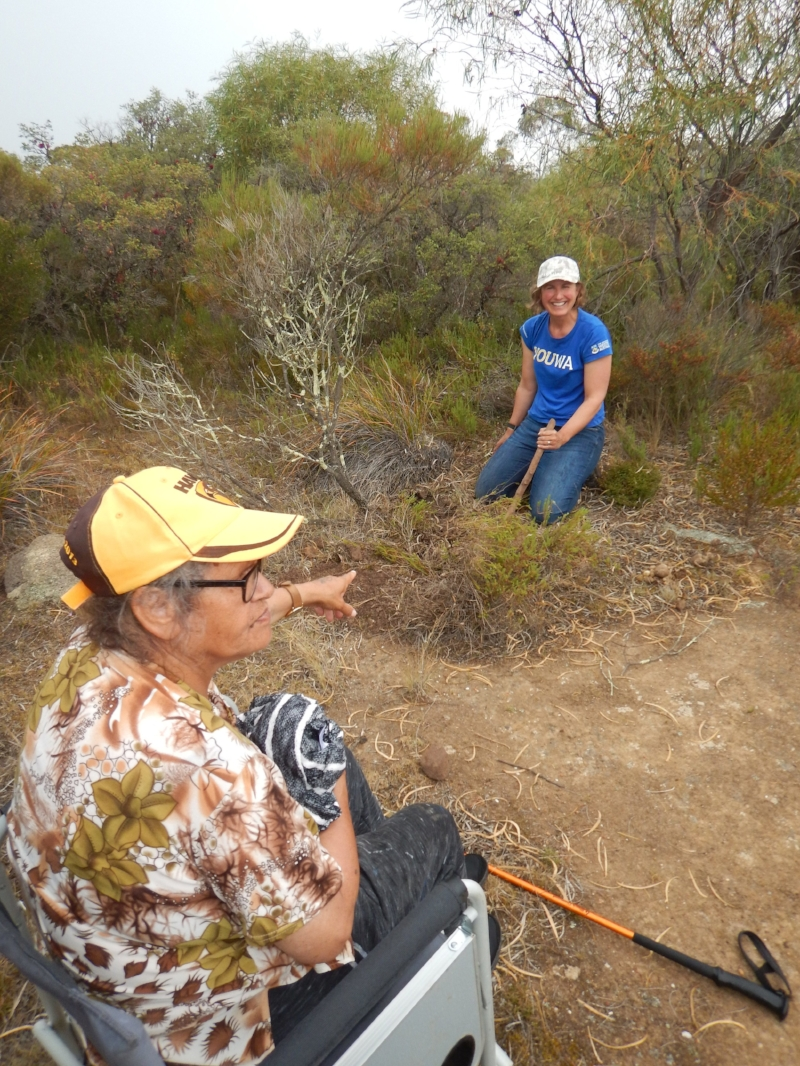 Aunty Lynette Knapp giving instructions to Alison harvesting youaq (Platysace deflexa) near Ravensthorpe, WA.  Photo credit: Steve Hopper.