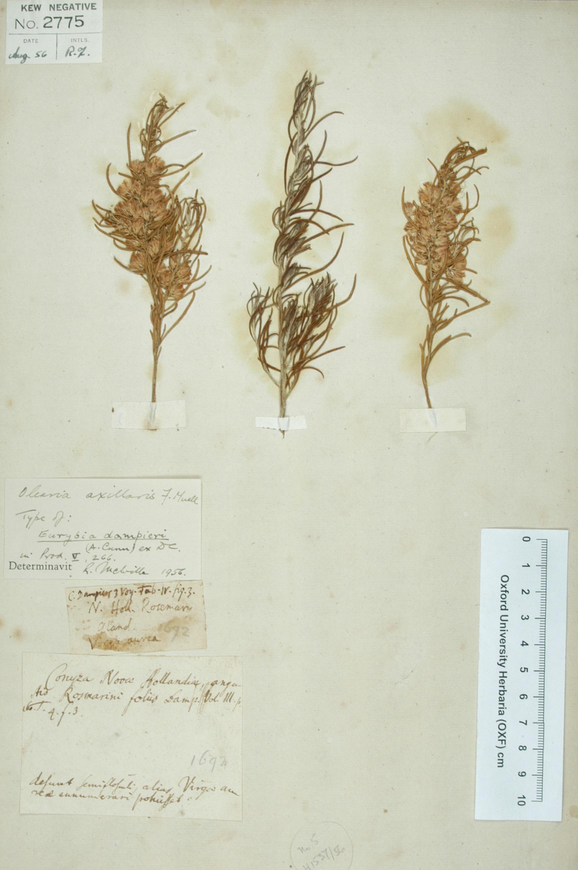 Dampier's Plants