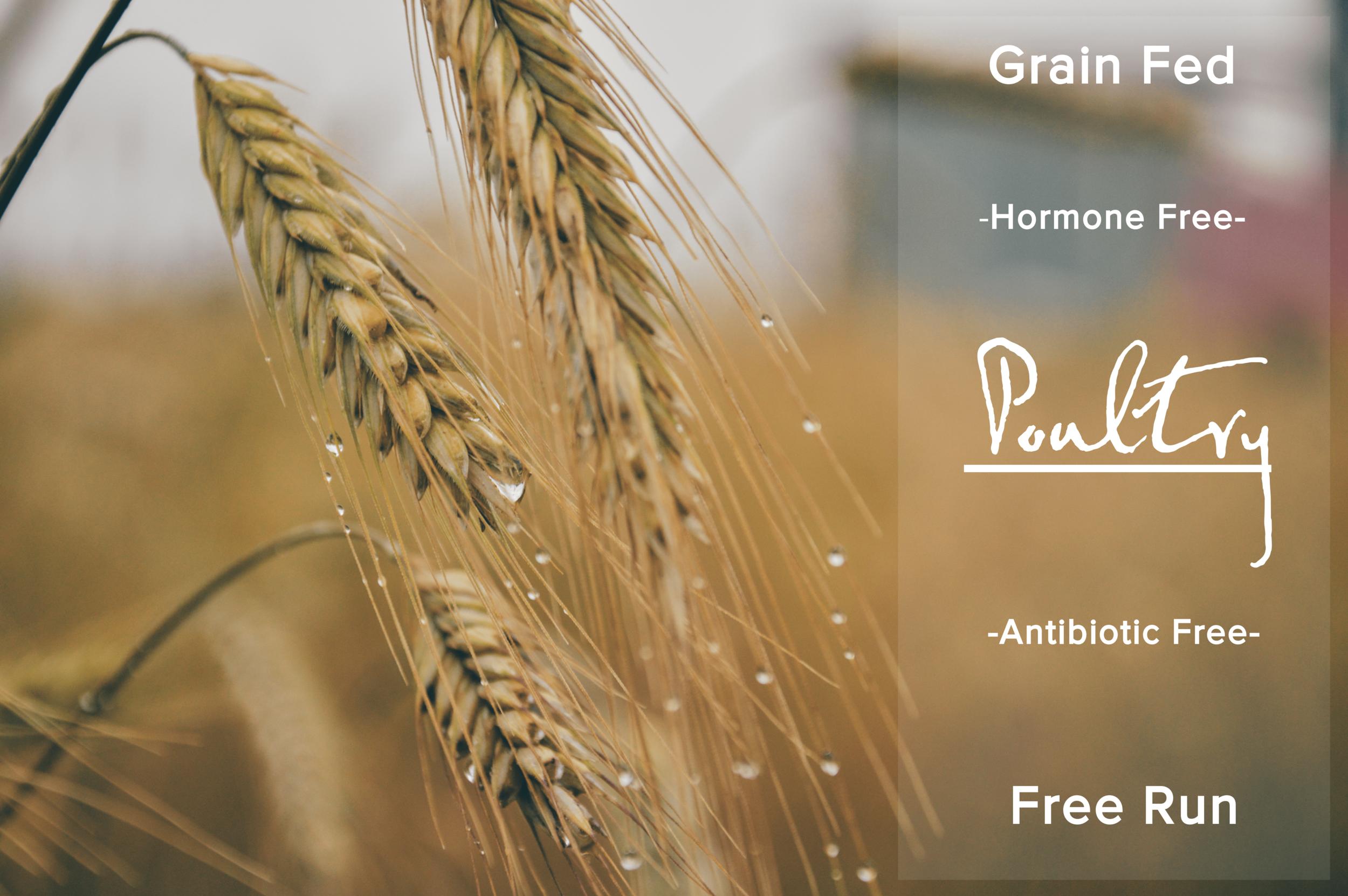 grain fed-min.png