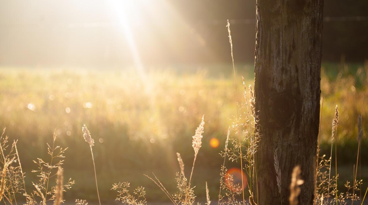 field-summer-sun-meadow.jpg