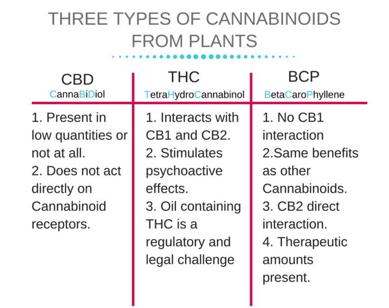 Endocannabinoid-System-5-768x644.png