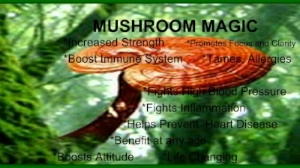 Medicinal mushrooms are adaptogens and give us daily resilience against pathogens and stress. They can be added to coffee.