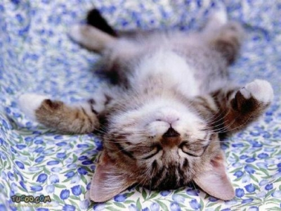 sleep_cat3.jpg