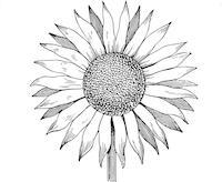 best-15-sunflower-outline-clipart-kid-file-free.jpg