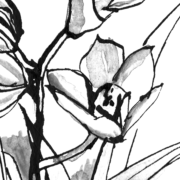 home_0007_orchids.jpg