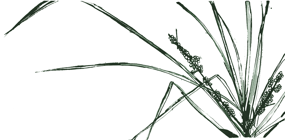 salbinda-ink_0007_grass.jpg