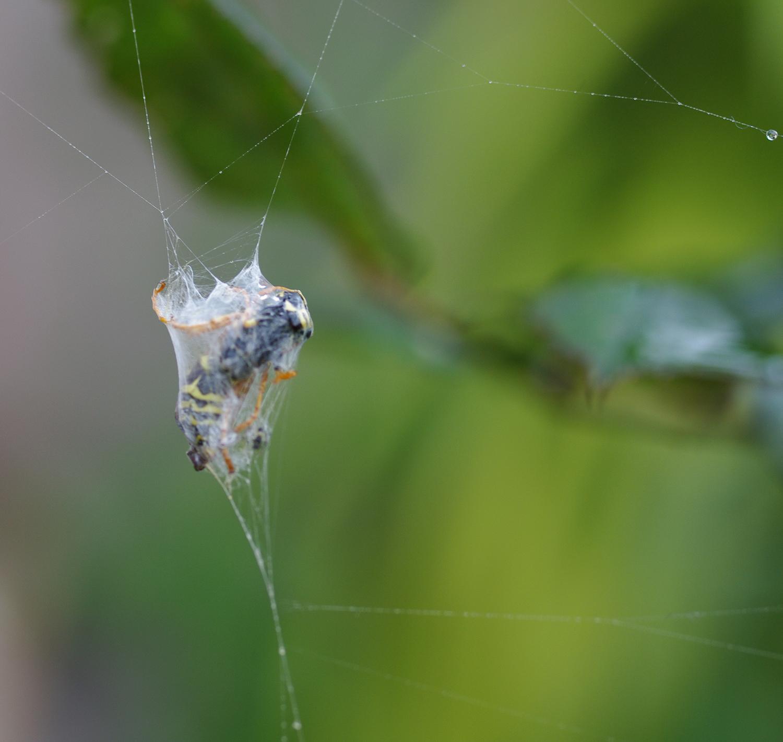 wasp and web.jpg