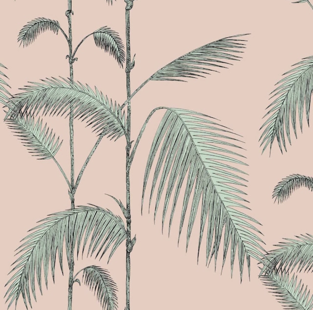 Palm Jungle by Cole & Son