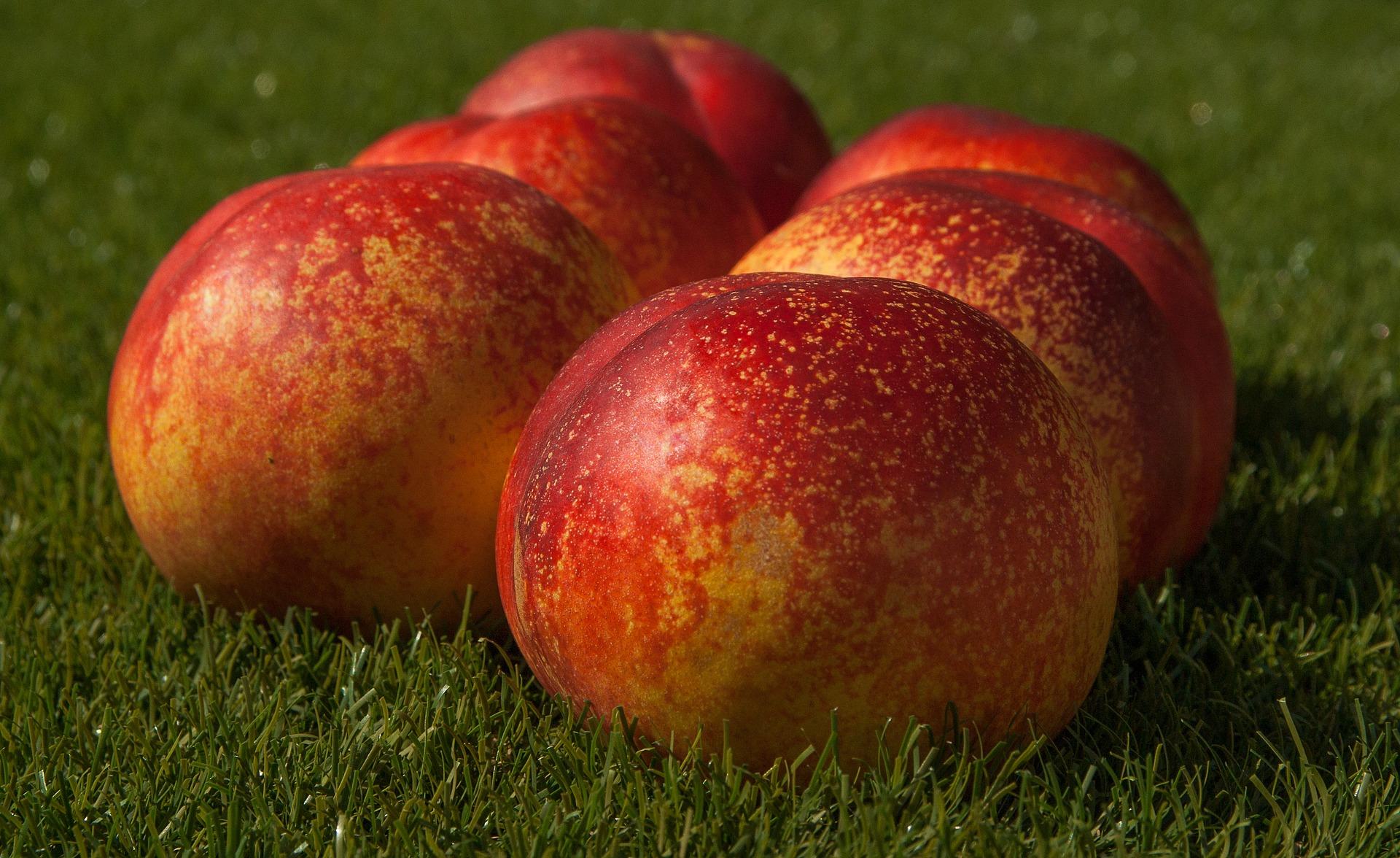 fruit-1605911_1920.jpg