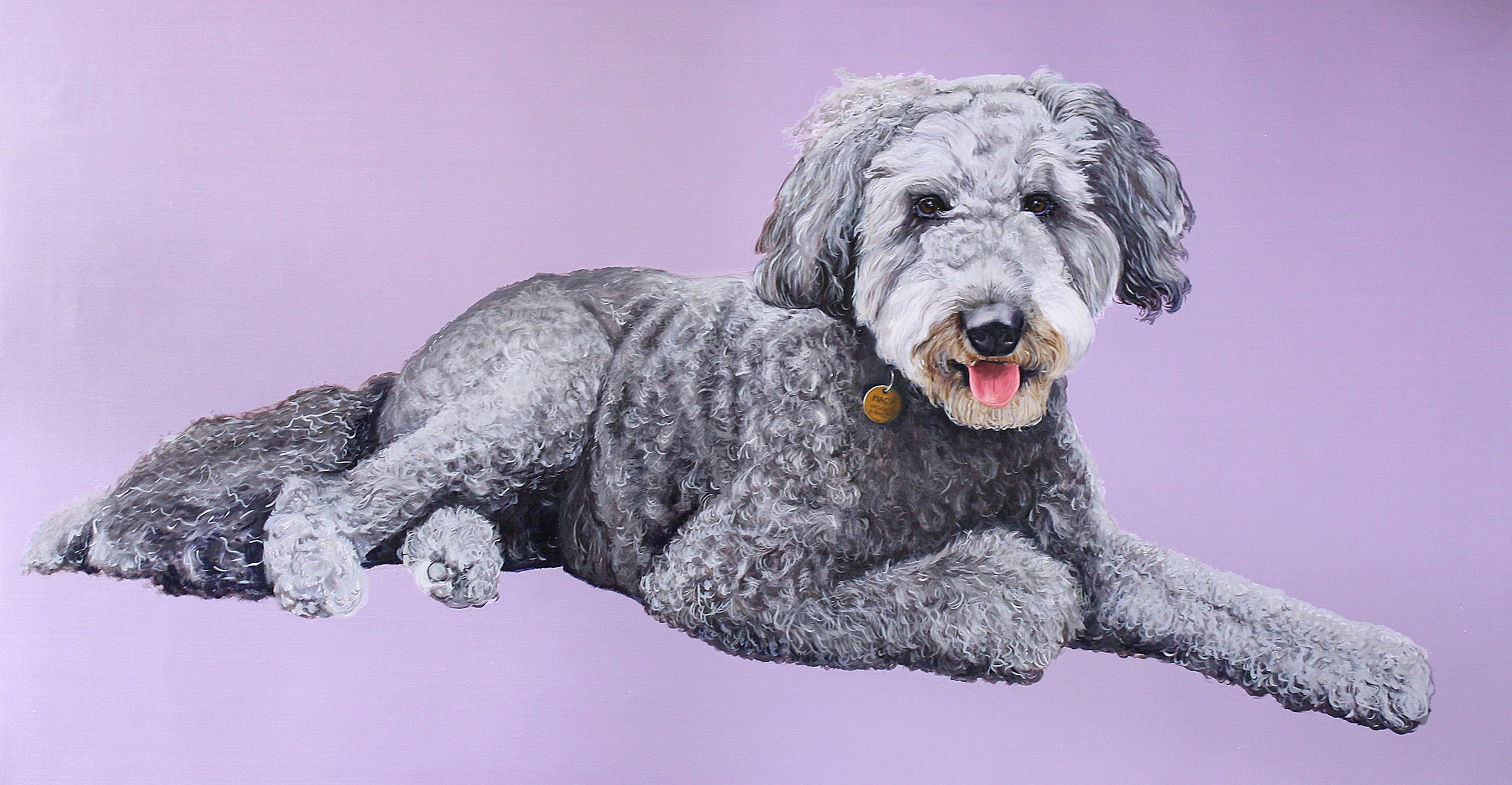 MACY THE LABRADOODLE