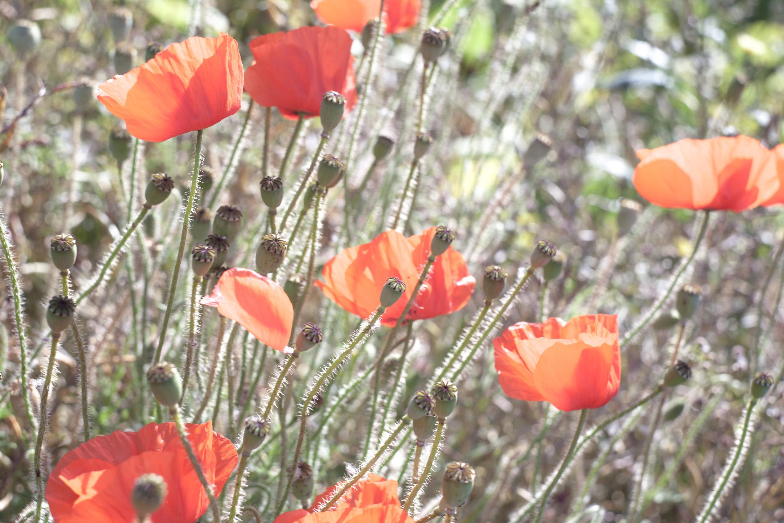 Flowers_Haze.jpg